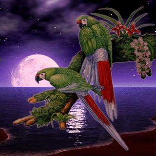 Обои на телефон попугаи, пейзаж