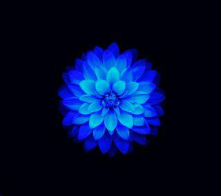 Обои на телефон лотус, эпл, цветы, синие, абстрактные, ios flower blue sb, ios, apple