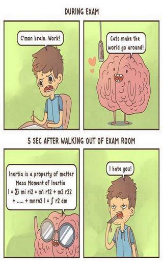 Обои на телефон студент, мозг, думать, работа, ненависть, забавные, веселые, exam