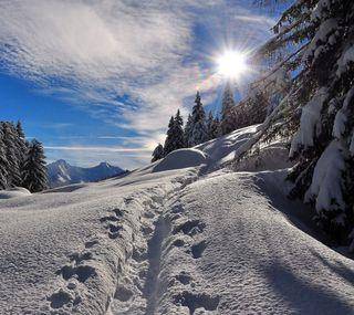 Обои на телефон холодное, солнце, снег, природа, лес, зима