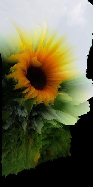 Обои на телефон love, my art, любовь, природа, арт, прекрасные, цветы, желтые, неоновые, утро, мой, подсолнухи