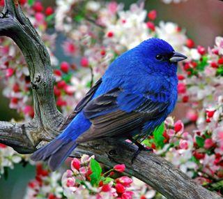 Обои на телефон питомцы, синие, птицы, животные, blue bird