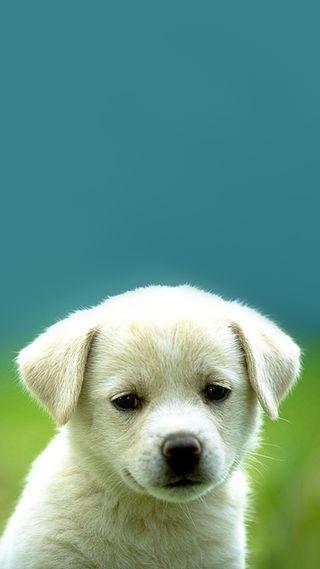 Обои на телефон щенки, питомцы, милые, любовь, животные, love, innocent