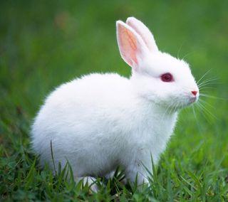 Обои на телефон кролики, милые, cute rabbit, 2160x1920