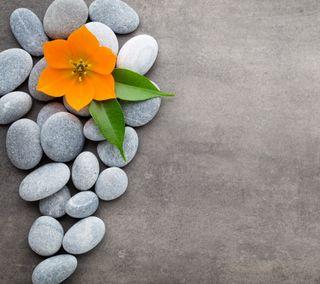 Обои на телефон дзен, цветы, спа, камни