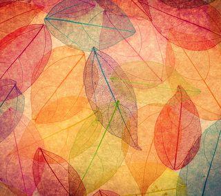 Обои на телефон осень, цветные, листья, transparent