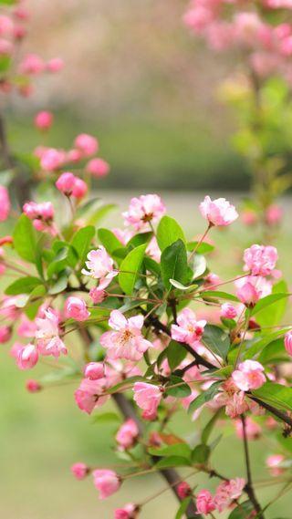 Обои на телефон топ, цветы, самсунг, розовые, приятные, новый, лучшие, крутые, samsung pink flowers, good, awosome, 4u