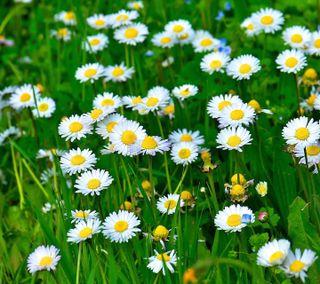 Обои на телефон фотографии, эмоджи, цветы, цветные, фото, природа, пейзаж, крутые