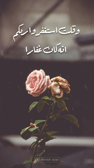 Обои на телефон замечательный, розы, приятные, орхидея, орхидеи, мусульманские, молитва, исламские