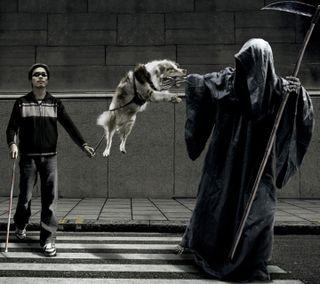 Обои на телефон мастер, трогать, собаки, смерть, серые, не, мой, dont touch my master, blind