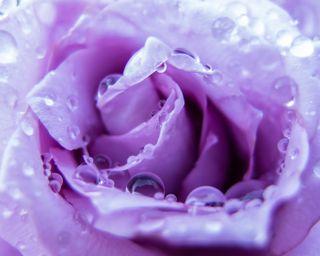 Обои на телефон туман, цветы, розы, природа, капли, вода, due, drops on rose