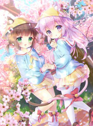 Обои на телефон вишня, школа, цветы, цвести, сакура, розовые, маленький, каваи, девушки, аниме, zakura, school uniform, jingle bell, cherry blossom