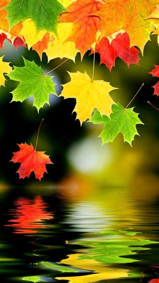 Обои на телефон листья, природа, осень, autumn leaves