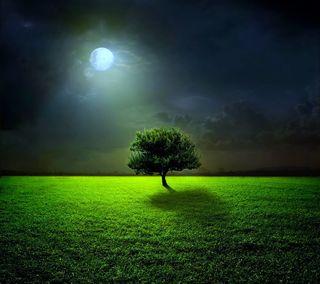 Обои на телефон поле, луна, дерево, ночь