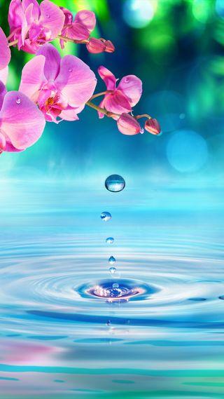Обои на телефон красота, цветы, теплые, синие, розовые, природа, праздник, любовь, лето, капли, вода, warm countries, love, exotics