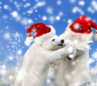 Обои на телефон медведи, счастливое, снег, санта, рождество, милые, медведь, зима, белые, christmas bears