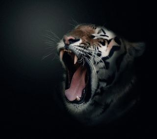 Обои на телефон тигр, pq, hf