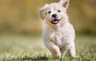 Обои на телефон щенки, трава, счастливые, собаки, милые, малыш, животные, happy