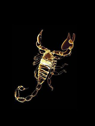 Обои на телефон скорпион, фон, неоновые, золотые, животные, scorpions, hd