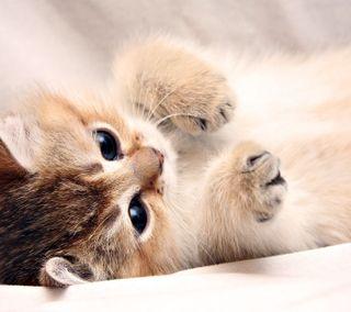 Обои на телефон прекрасные, мяу, котята, милые
