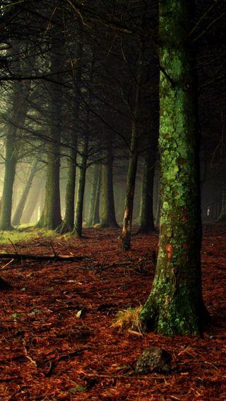 Обои на телефон туман, темные, лес, деревья