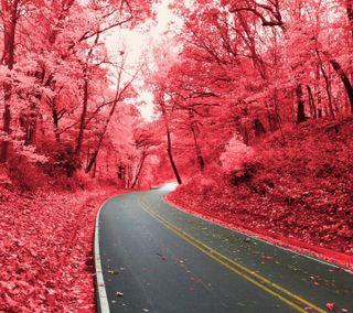 Обои на телефон осень, улица, рок, розовые, природа, небо, листья, дорога, деревья, starved rock pink
