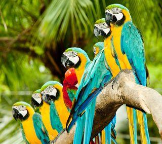 Обои на телефон попугай, птицы, лес, дождь, дерево, ветка, rain forest