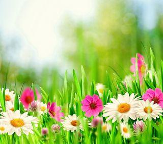 Обои на телефон солнечный свет, цветы, цветение, луг, весна, spring meadow