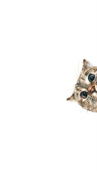 Обои на телефон хаха, смех, мяу, лол, милые, кошки, кошачий, котята, забавные, глаза, lol