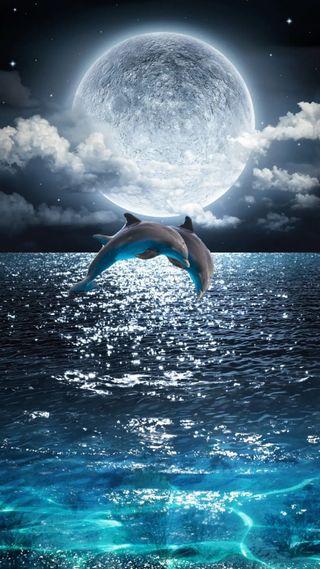 Обои на телефон море, синие, рыба, плавание, океан, луна, звезды, дельфины, галактика, galaxy, dolphins jumping