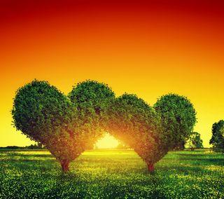 Обои на телефон растения, сердце, любовь, листья, дерево, love