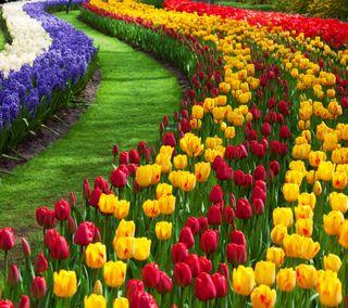 Обои на телефон природа, цветы, растения, тюльпаны
