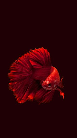Обои на телефон рыба, красые