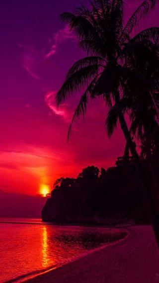 Обои на телефон пляж, пальмы, море, деревья