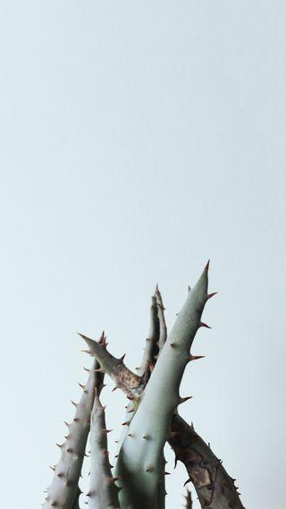 Обои на телефон растения, простые, острый, кактус, tentacles, spines, pointy, hd