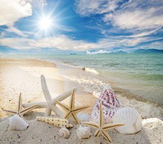 Обои на телефон раковина, пляж, shell and beach, shell and