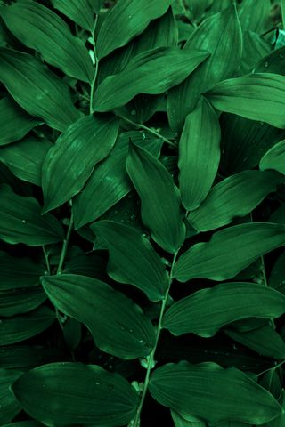 Обои на телефон растения, цветы, природа, листья, зеленые, green genes