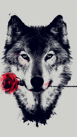 Обои на телефон охотник, хипстер, розы, питомцы, одинокий, красые, король, волк, wolfroz, tumblr