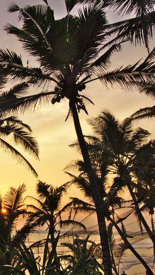 Обои на телефон шри, пляж, пальмы, облака, море, ланка, закат, palm beach sri lanka, mirissa