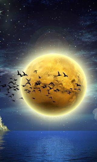 Обои на телефон птицы, луна, big