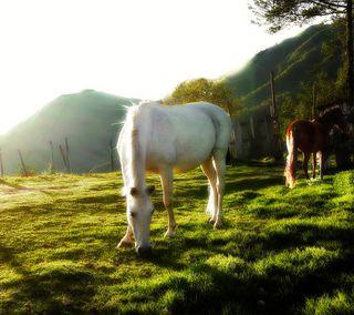 Обои на телефон лошади, прекрасные, пейзаж, лошадь, закат, животные, деревья, дерево, горы