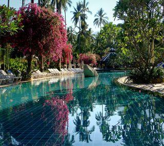 Обои на телефон pool garden, милые, приятные, прекрасные, взгляд, сад