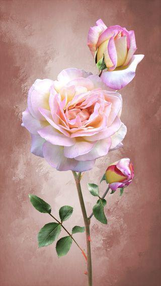 Обои на телефон дзен, цветы, розы, розовые, приятные, винтаж, арт, art