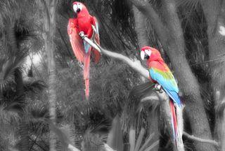 Обои на телефон попугай, цветные, птицы, красочные, macaw, colorful macaws