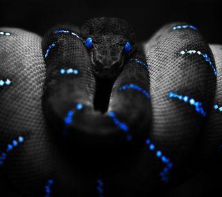 Обои на телефон рептилия, змея, животные