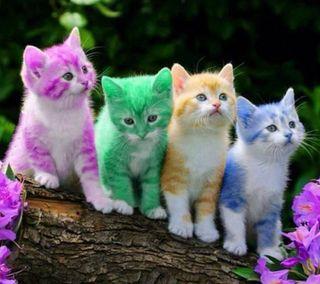 Обои на телефон питомцы, цветные, милые, котята, коты, восхитительные, vz kitty