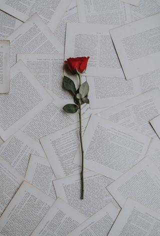 Обои на телефон розы, pages