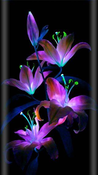 Обои на телефон неоновые, цветы, floers
