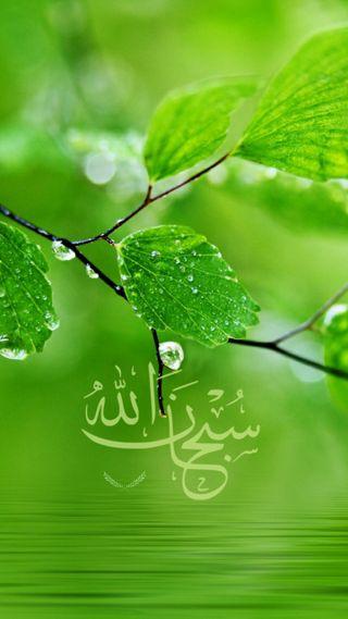 Обои на телефон мусульманские, исламские, ислам, дерево, бог, арабские, аллах, subhan allah, hd