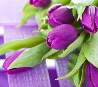 Обои на телефон тюльпаны, фиолетовые, весна